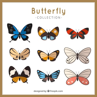 Różne rodzaje kolorowych motyli