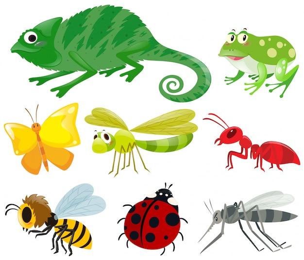 Różne rodzaje owadów