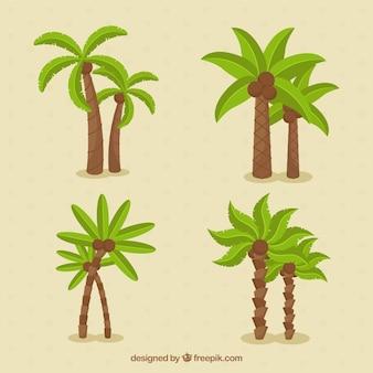 Różne rodzaje palmy