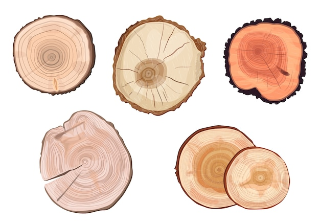 Różne rodzaje pierścieni drzew