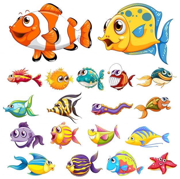 Różne rodzaje ryb