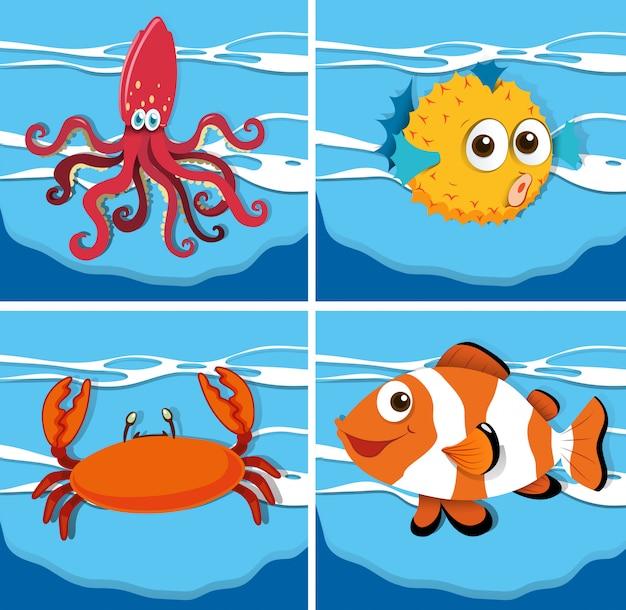 Różne rodzaje zwierząt morskich