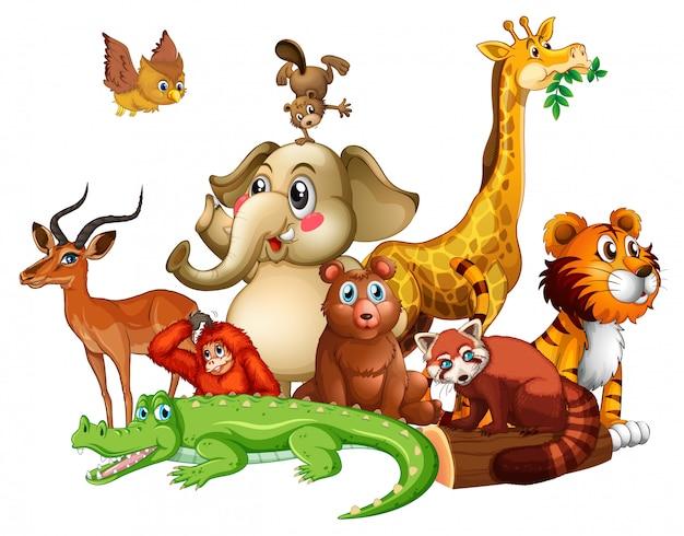 Różne rodzaje zwierząt na białym tle