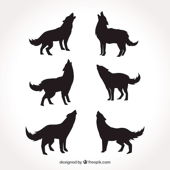 Różne sylwetki wilków