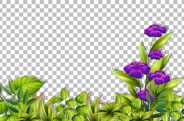 Różne tropikalne liście na przezroczystym tle