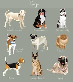 Różne typy psów zestaw na białym tle