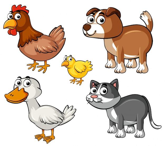 Różne typy zwierząt gospodarskich