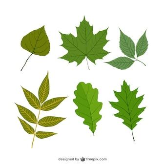 Różne zielone liście