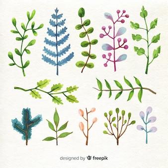 Różnorodne kolorowe akwarele liści i kwiatów