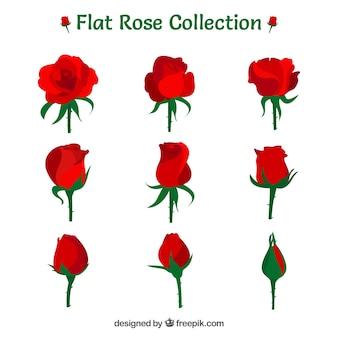 Różnorodność dziewięciu czerwonych róż w płaskim stylu