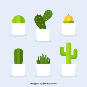 Różnorodność kaktusa w płaskiej konstrukcji