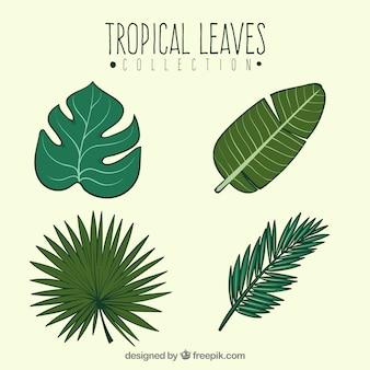 Różnorodność liści tropikalnych