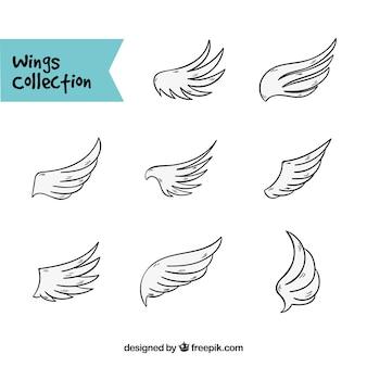 Różnorodność szkiców skrzydłowych