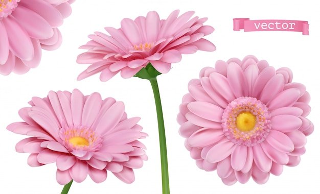 Różowa dalia. zestaw kwiatów rumianku 3d