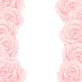 Różowa róża granicy