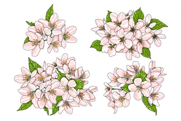 Różowe kwiaty jabłoni z zielonymi liśćmi.