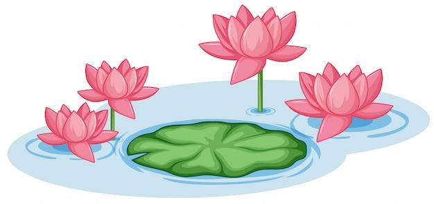 Różowe kwiaty lotosu z jednym zielonym liściem w stawie