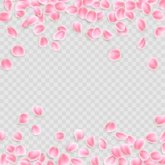 Różowe płatki na przezroczystym tle.