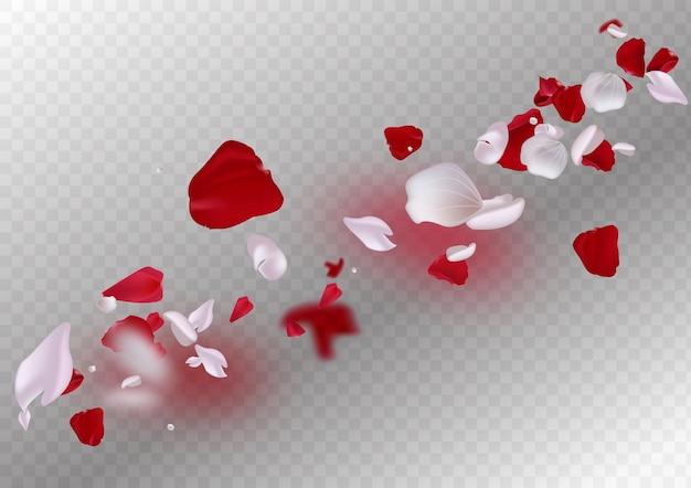 Różowe płatki spadające na przezroczystym tle
