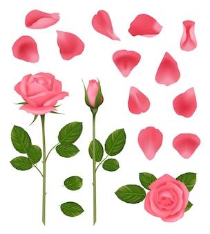 Różowe róże. pąki i płatki pięknych romantycznych roślin ślubnych róże z liśćmi wektor zestaw realistycznych zdjęć. różowy kwiat róży do, ilustracja dekoracji ślubnych