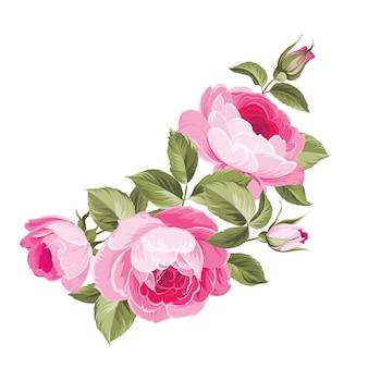 Różowe róże z liśćmi