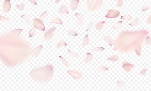 Różowe sakura spadające płatki tła.