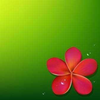 Różowy frangipani z zielonym tłem