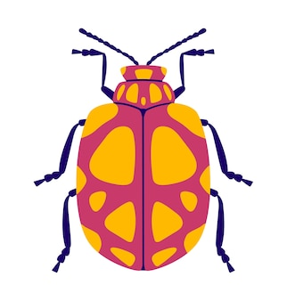 Różowy i żółty chrząszcz płaski. na białym tle .