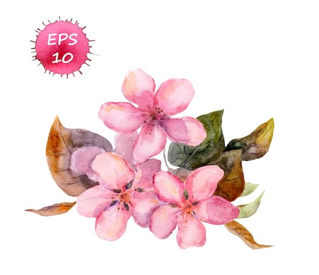 Różowy kwiat wiśni: jabłko, wiśnia, sakura.