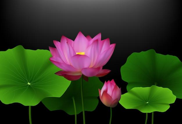 Różowy lotosowy kwiat z zielonymi liśćmi na czarnym tle