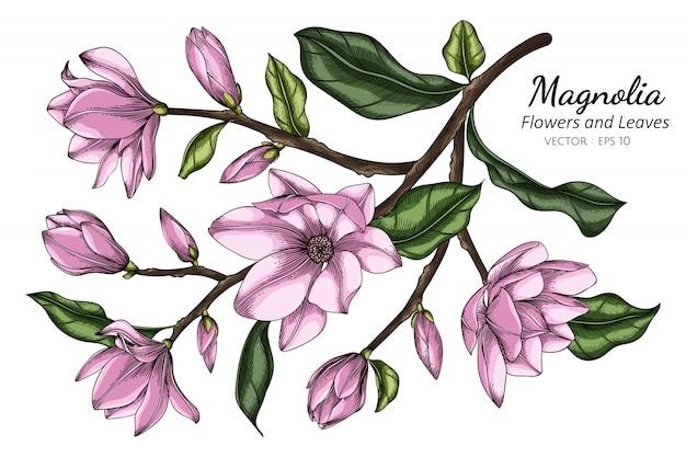 Różowy magnoliowy kwiat i liść rysunkowa ilustracja z kreskową sztuką na białych tło.