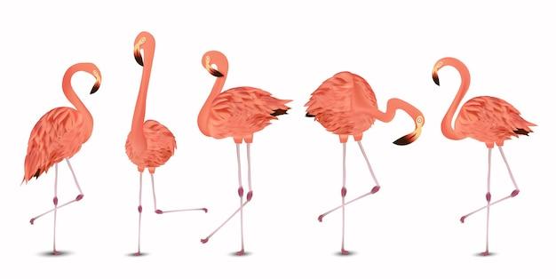 Różowy zestaw flamingo