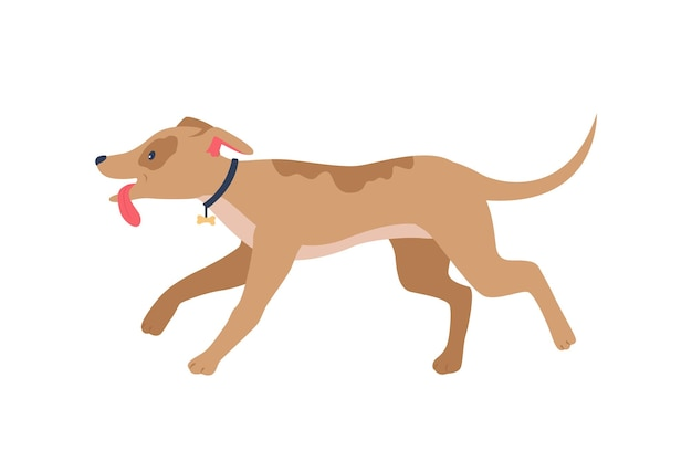 Running happy houd w płaskim kolorze kołnierza szczegółowy charakter