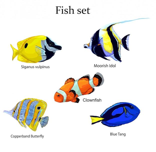 Ryba zestaw ilustracji wektorowych