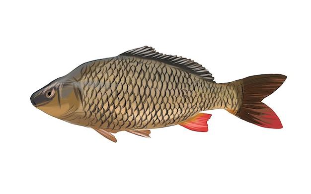 Ryby karpiowe z wielobarwnych farb splash realistycznego rysunku w kolorze akwareli