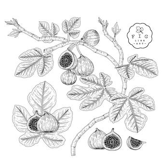 Rys. ozdobny kwiat na białym tle