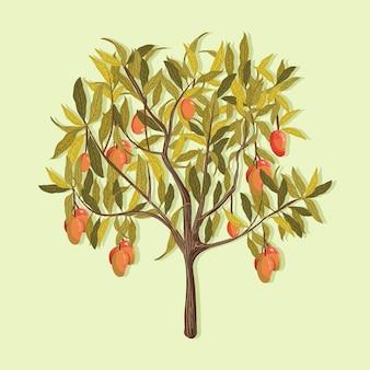Rysowane botaniczne drzewo mango
