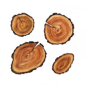 Rysowane wycinki drzew. zestaw ilustracji okrągłych kawałków drewna do dekoracji