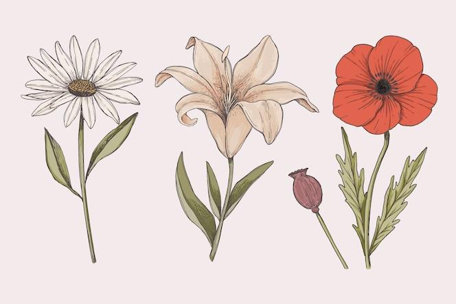 Rysowanie kolekcji kolorowych kwiatów botaniki vintage
