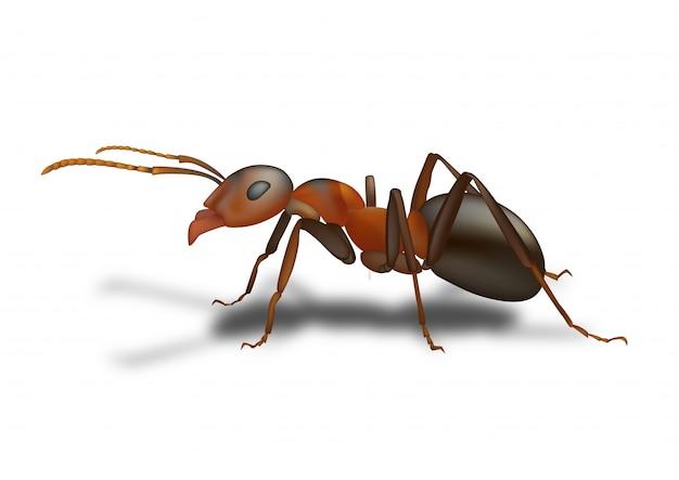 Rysowanie mrówek