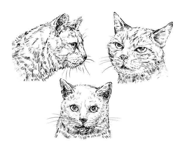 Rysowanie ręcznie rysowanej kolekcji kotów
