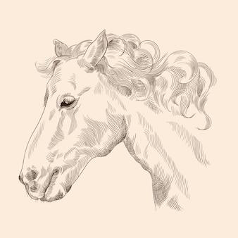 Rysunek głowy konia z grzywą w stylu vintage