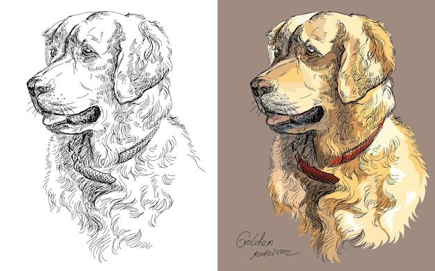 Rysunek głowy psa golden retriever. ilustracja wektorowa na białym tle kolorowe i monochromatyczne.