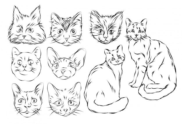 Rysunek odręczny kota i szkic czarno-biały