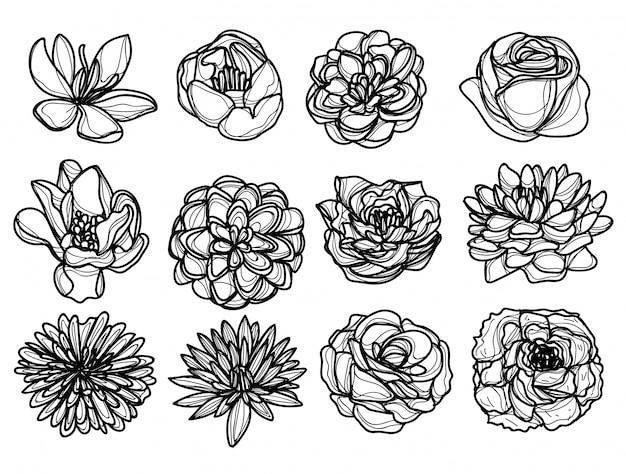 Rysunek ręka kwiaty i szkic czarno-biały