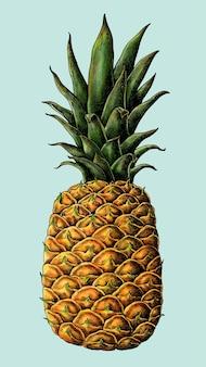 Rysunek świeżego ananasa kłującego