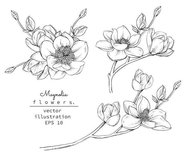 Rysunki kwiat magnolii.