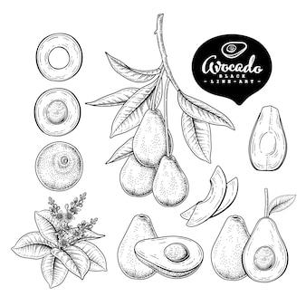 Rysunki owoców awokado