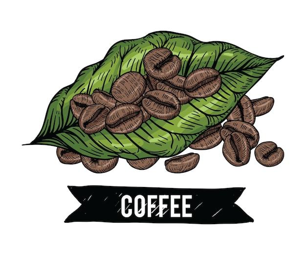 Rysunki ziaren kawy