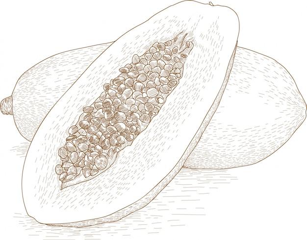 Rysunkowa ilustracja melonowiec owoc